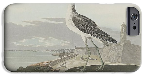 Seagull Drawings iPhone Cases - Greenshank iPhone Case by John James Audubon