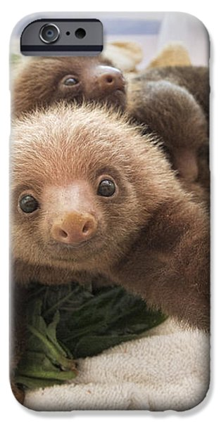 Hoffmanns Two-toed Sloth Choloepus iPhone Case by Suzi Eszterhas