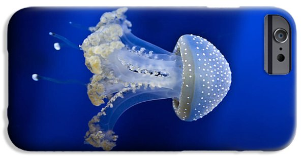 Fear iPhone Cases - Jellyfish iPhone Case by Joana Kruse