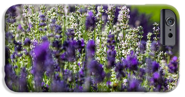 Blooming Pyrography iPhone Cases - Lavender iPhone Case by Peteris Vaivars