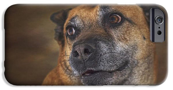 Recently Sold -  - Dog Close-up iPhone Cases - Mabel  iPhone Case by Brian Cross