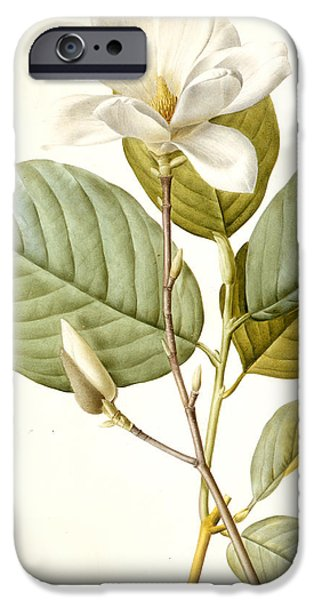 Flora Drawings iPhone Cases - Magnolia iPhone Case by Pierre Joseph Redoute