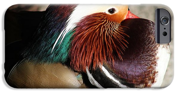 Small Pyrography iPhone Cases - Mandarin Duck iPhone Case by Valia Bradshaw