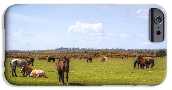 Pony iPhone Cases - New Forest - Hampshire - UK iPhone Case by Joana Kruse