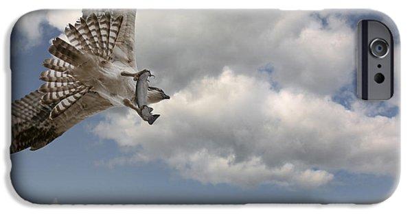 Flight iPhone Cases - Osprey in Flight iPhone Case by Wildlife Fine Art