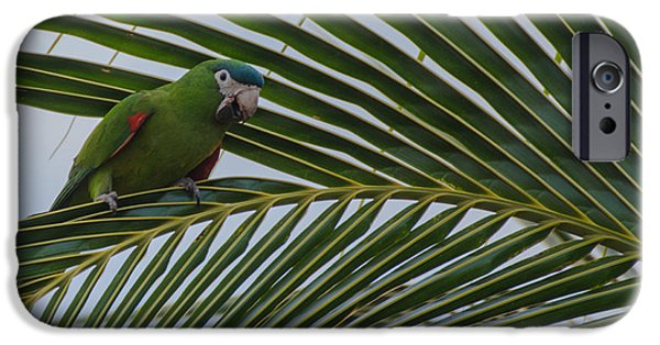 Thinking iPhone Cases - Parrot iPhone Case by Daniel Precht