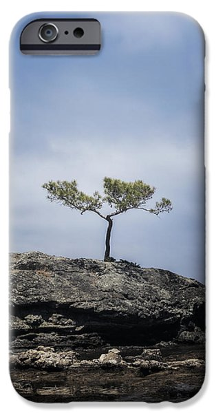 Pines Photographs iPhone Cases - Pine Tree iPhone Case by Joana Kruse