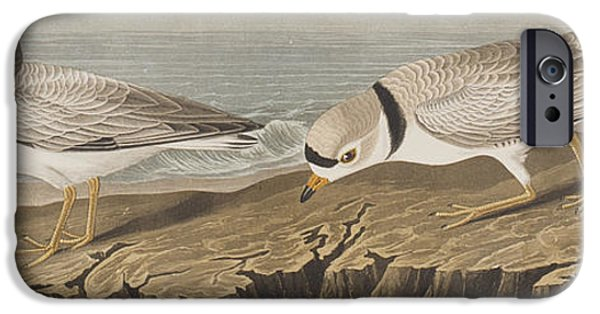 Sea Birds iPhone Cases - Piping Plover iPhone Case by John James Audubon