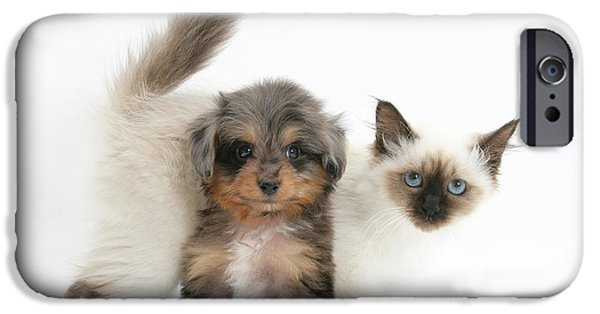 Domesticated Animals iPhone Cases - Puppy And Kitten iPhone Case by Mark Taylor