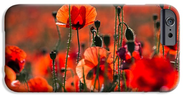Blooming Pyrography iPhone Cases - Red poppy iPhone Case by Peteris Vaivars