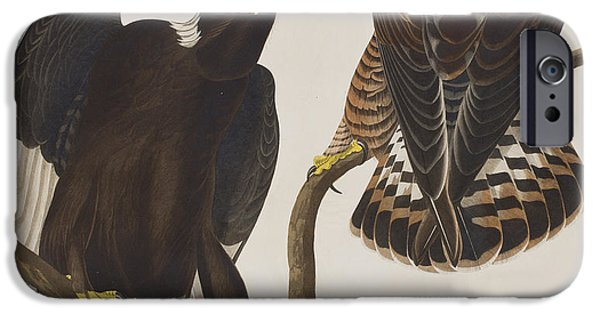 Falcon iPhone Cases - Rough-legged Falcon iPhone Case by John James Audubon