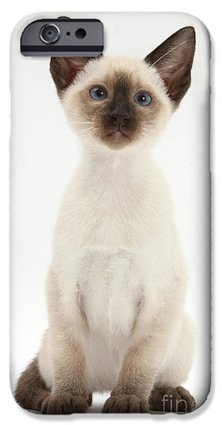 Domesticated Animals iPhone Cases - Siamese Kitten iPhone Case by Mark Taylor