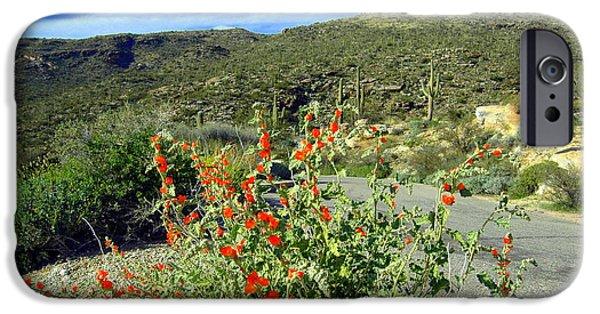 Cactus Southwest Cactus Flower Orange Wildflowers Nature Arizona iPhone Cases - Springtime in the Desert iPhone Case by Teresa Stallings