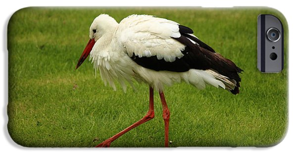 Meadow Photographs iPhone Cases - Stork iPhone Case by Heike Hultsch