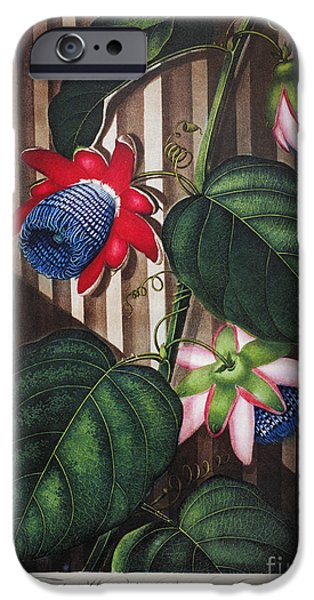 THORNTON: PASSION-FLOWER iPhone Case by Granger