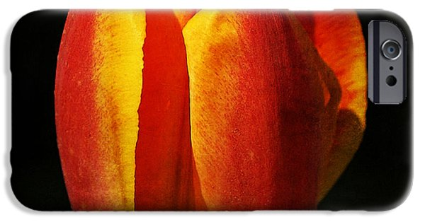Crops iPhone Cases - Tulip 27 iPhone Case by Ingrid Smith-Johnsen