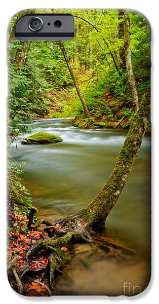 Tree Roots iPhone Cases - Whatcom Creek iPhone Case by Idaho Scenic Images Linda Lantzy