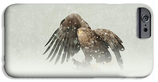 Norway iPhone Cases - White-tailed Eagle iPhone Case by Andy Astbury