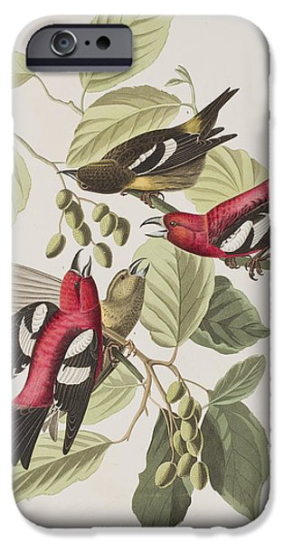 Animal Drawings iPhone Cases - White-winged Crossbill iPhone Case by John James Audubon
