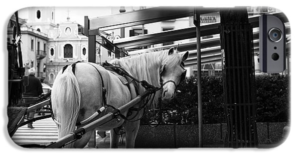 Horse And Buggy iPhone Cases - You Looking At Me iPhone Case by John Rizzuto