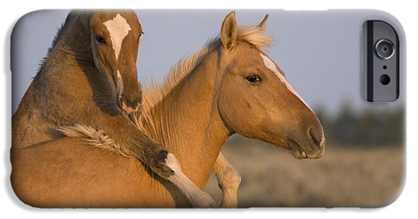 Recently Sold -  - Animals Photographs iPhone Cases - Young Mustangs Playing iPhone Case by Jean-Louis Klein & Marie-Luce Hubert