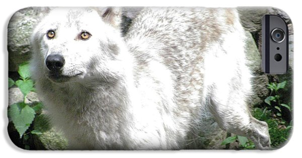 To Dominate iPhone Cases - The Wild Wolve Group A iPhone Case by Debra     Vatalaro