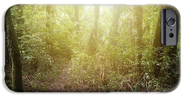Forest iPhone Cases - Forest light iPhone Case by Les Cunliffe
