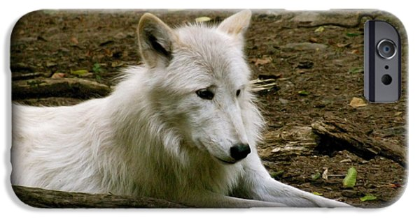 Arctic Wolf Mixed Media iPhone Cases - The Wild Wolve Group A iPhone Case by Debra     Vatalaro