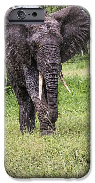 Power iPhone Cases - African elephant in the Tarangire National Park, Tanzania iPhone Case by Mariusz Prusaczyk