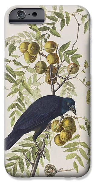Feather Drawings iPhone Cases - American Crow iPhone Case by John James Audubon