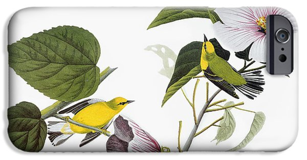 Audubon iPhone Cases - Audubon: Warbler, (1827-38) iPhone Case by Granger