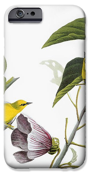 AUDUBON: WARBLER, (1827-38) iPhone Case by Granger