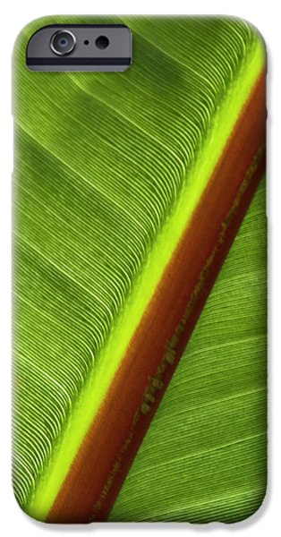 Banana Leaf iPhone Case by Heiko Koehrer-Wagner