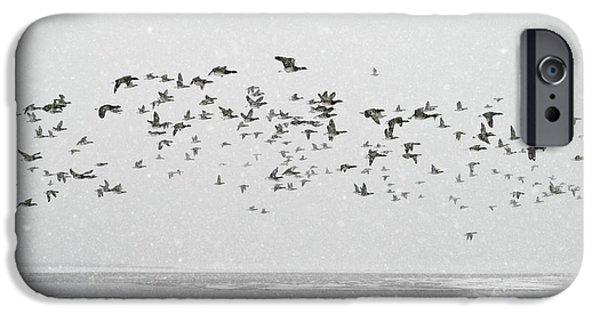 Winter Storm iPhone Cases - Brent Goose Flock In Flight iPhone Case by Duncan Shaw