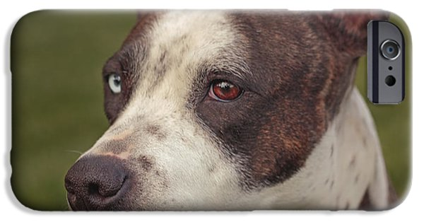 Dog Close-up iPhone Cases - Cleopitra  iPhone Case by Brian Cross
