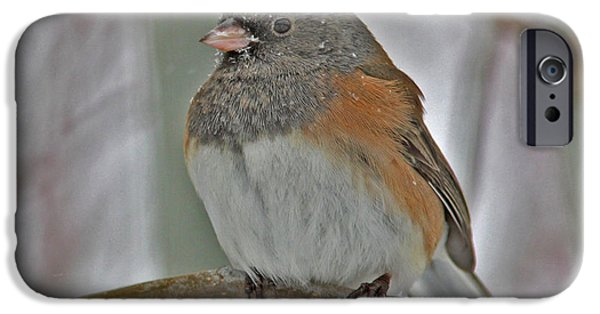 Snow iPhone Cases - Dark-eyed Junco iPhone Case by Gary Wing