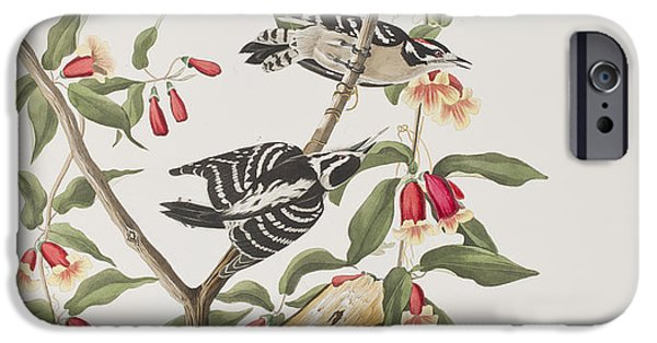 Botanical Drawings iPhone Cases - Downy Woodpecker iPhone Case by John James Audubon