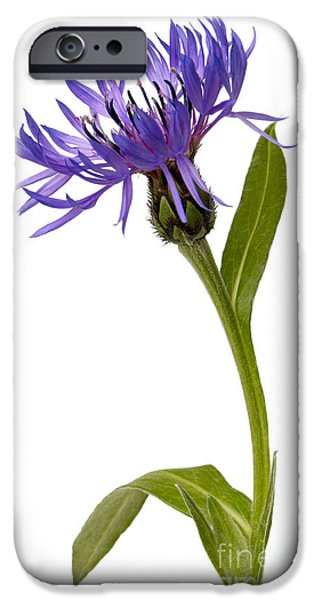 For Healthcare iPhone Cases - Flowers iPhone Case by Tony Cordoza