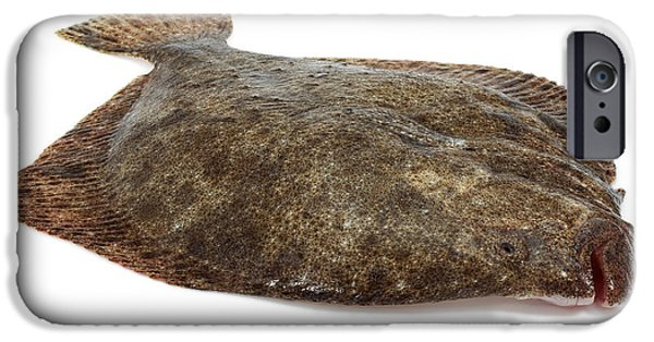 Cut-outs iPhone Cases - Fresh Turbot Scophthalmus Maximus iPhone Case by Gerard Lacz