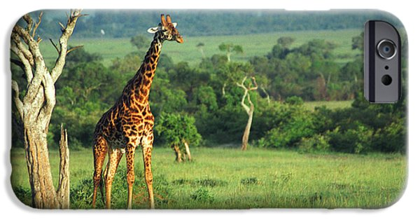 Landscape iPhone Cases - Giraffe iPhone Case by Sebastian Musial