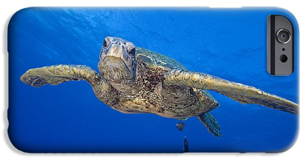 Animal Wisdom iPhone Cases - Hawaii, Green Sea Turtle iPhone Case by Dave Fleetham - Printscapes