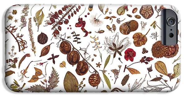 Flora Drawings iPhone Cases - Herbarium Specimen iPhone Case by Rachel Pedder-Smith
