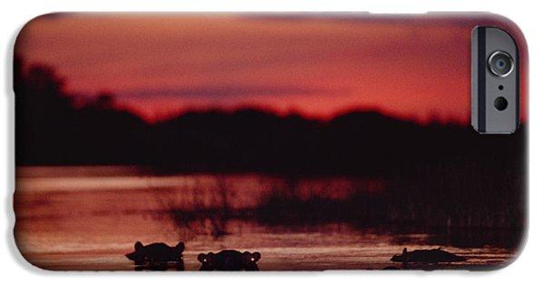 Four Animal Faces iPhone Cases - Hippopotamus Hippopotamus Amphibius iPhone Case by Gerry Ellis