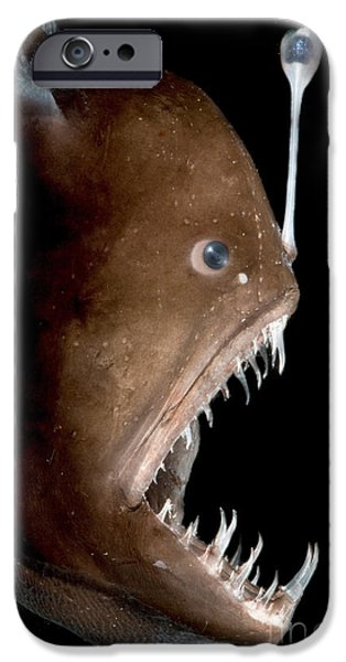 Marine iPhone Cases - Johnsons Abyssal Seadevil iPhone Case by Danté Fenolio