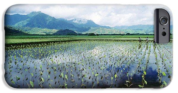 Reflection Harvest iPhone Cases - Kauai, Wet Taro Farm iPhone Case by Bob Abraham - Printscapes