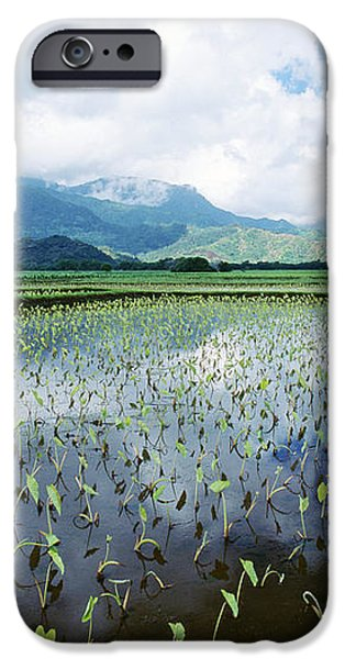 Kauai, Wet Taro Farm iPhone Case by Bob Abraham - Printscapes