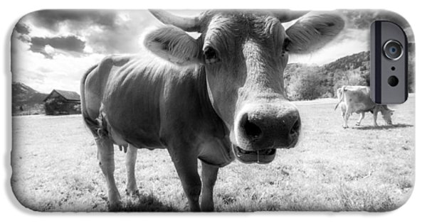 Brown Swiss iPhone Cases - Moo iPhone Case by Dominik Schraudolf