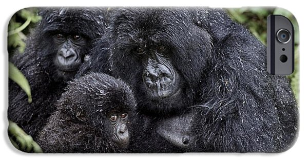 Parental Care iPhone Cases - Mountain Gorilla Family Group iPhone Case by Tony Camacho