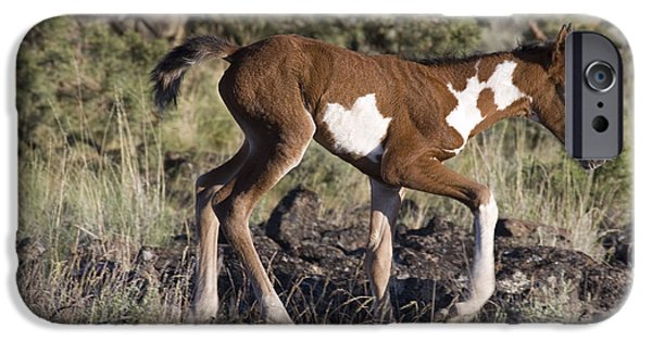 Overo iPhone Cases - Mustang Foal iPhone Case by Jean-Louis Klein & Marie-Luce Hubert