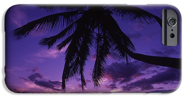 Overhang iPhone Cases - Palm Over The Beach iPhone Case by Ron Dahlquist - Printscapes